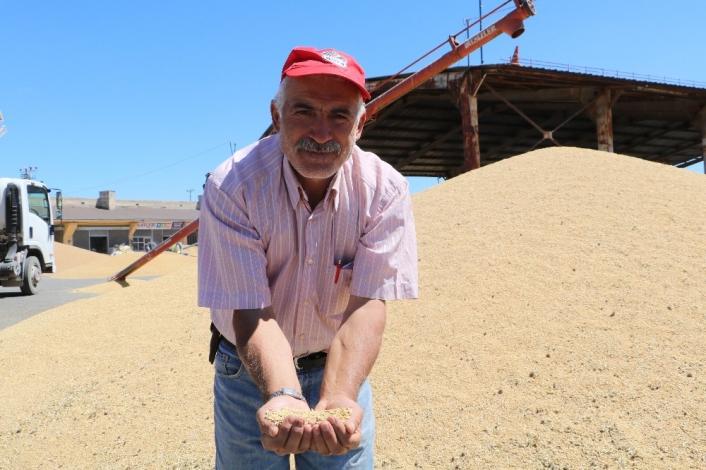 Buğday pazarında satışlar başladı