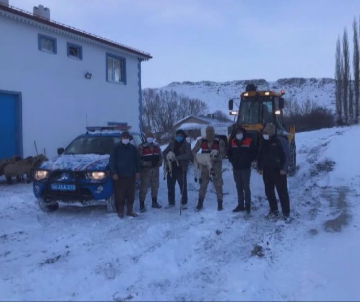 Çatısı çöken ahırdaki hayvanları jandarma ekipleri kurtardı
