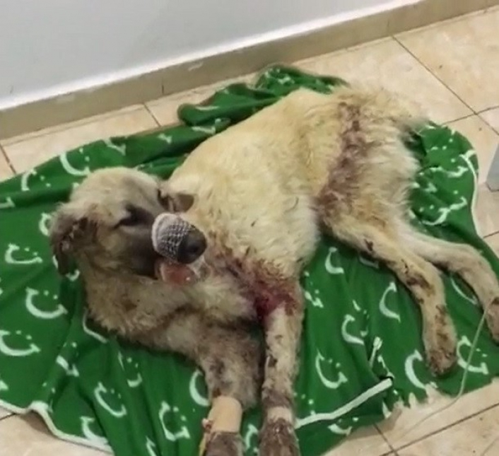 Çenesi kırılan sokak köpeği için seferber oldular