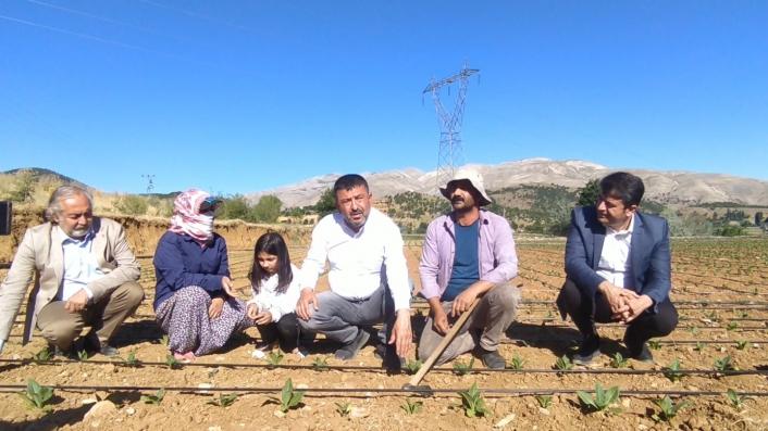 CHP heyeti tütün üreticileriyle tarlalarda buluştu
