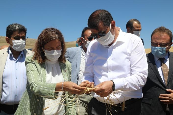 Dolu 10 bin dönümde ekili buğdayı ziyan etti