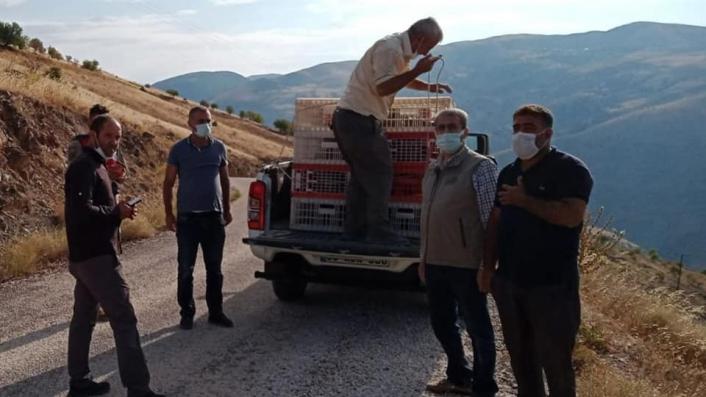 Elazığ´da 850 keklik doğaya salındı