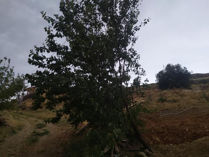 Elazığ´da fırtına ağaçları yerinden söktü