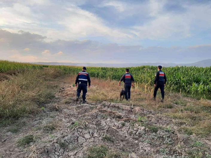 Elazığ´da jandarmadan suların çekildiği alanlarda yasa dışı kenevir ekimine karşı önlem