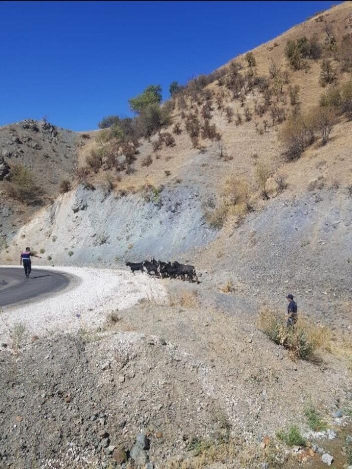 Elazığ´da kaybolan keçiler jandarmanın drone desteği ile bulundu