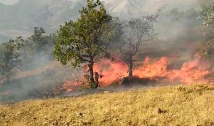 Elazığ´da orman yangını