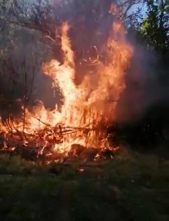 Elazığ´da yangın: 4 bahçe zarar gördü