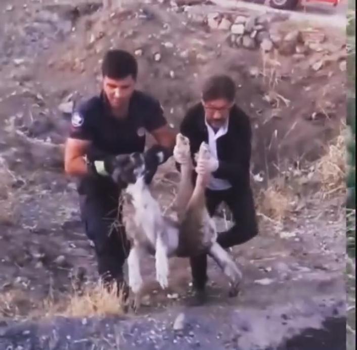 Elazığ´da yaralı halde bulunan köpek itfaiye ekipleri tarafından kurtarıldı
