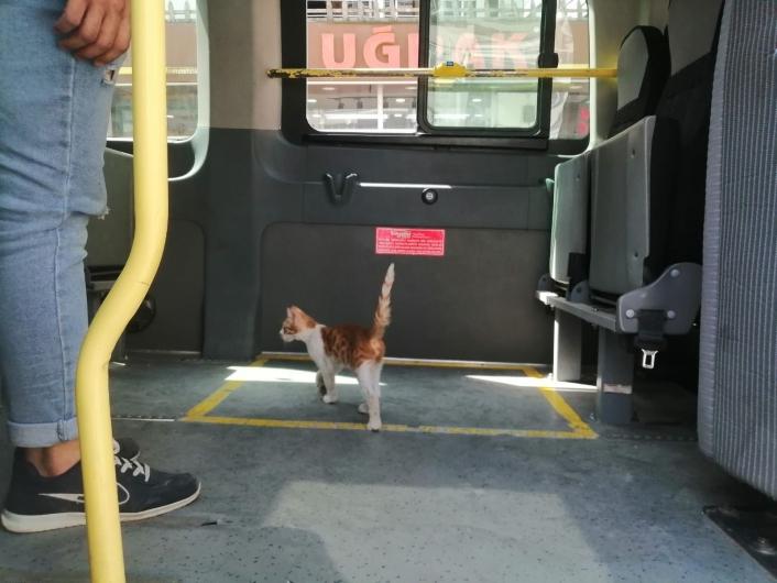 Elazığ´da yolcu gibi minibüse binen kedi, çarşı merkezine kadar yolculuk yaptı