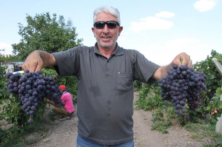Elazığ´ın üzüm köyünde erkenci üzüm hasadı