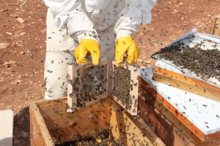 Gramı 500 TL olan arı zehri Adıyaman´da üretilmeye başlandı