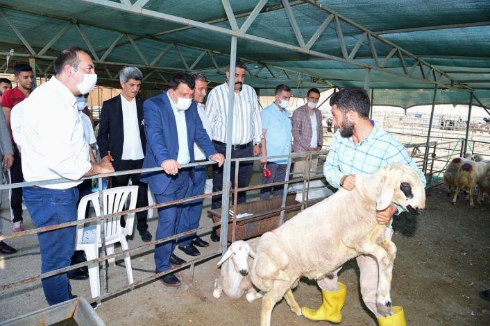 Gürkan, canlı hayvan pazarında inlemelerde bulundu