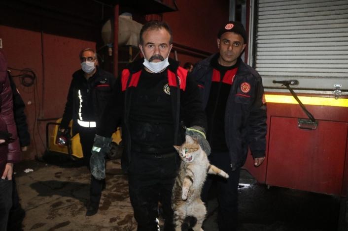 Hırçın kedi, ekipleri alarma geçirdi: Çıkması için hamsi bile verdiler