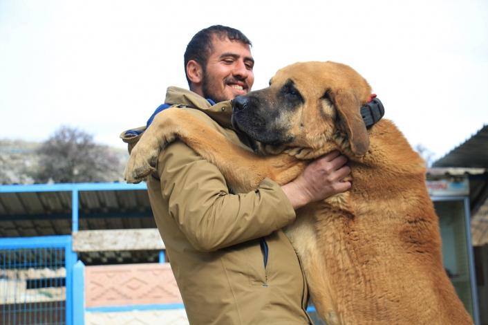 Hobisini işe dönüştüren vatandaş insan boyunda çoban köpekleriyle çiftlik kurdu