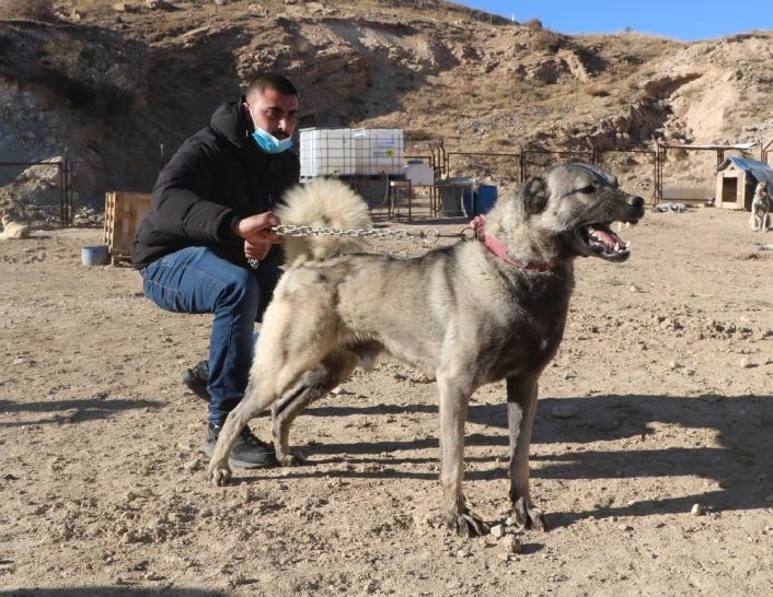 İsrailli baba ve oğlu kangallara hayran kaldı
