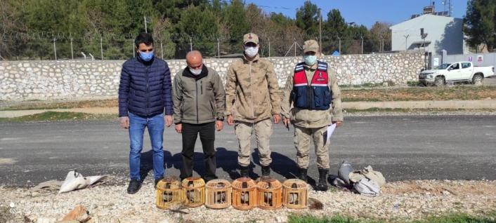 Jandarma keklikleri özgür bıraktı