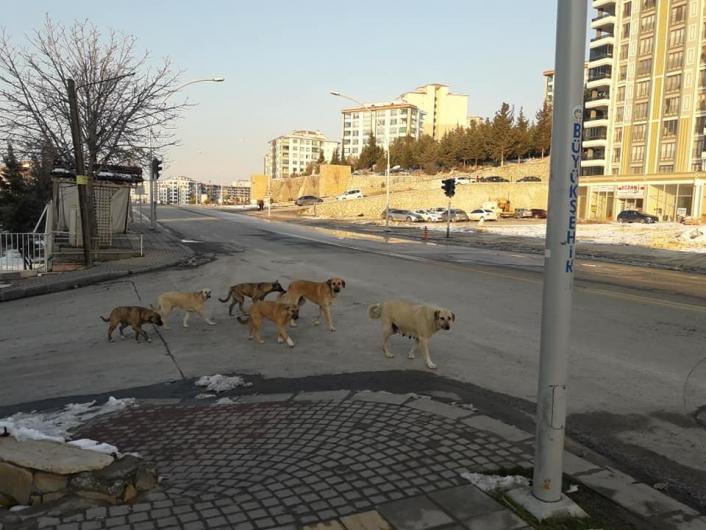 Kadın, köpeklerin saldırısında yaralandı