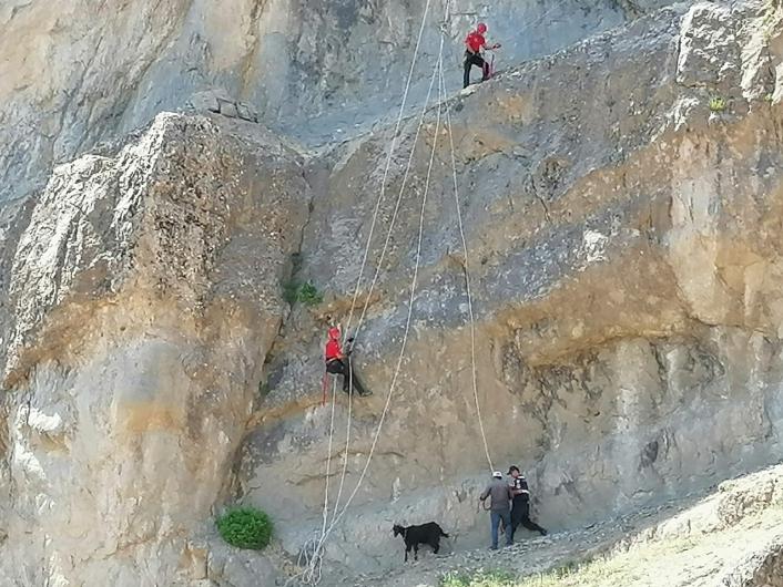 Kahramanmaraş´ta kayalıkta mahsur kalan hayvanları JAK timleri kurtardı