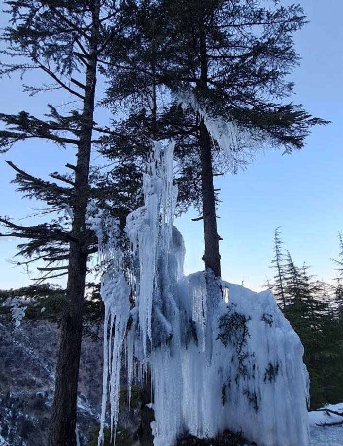 Kahramanmaraş´ta soğuktan ağaç buz tuttu