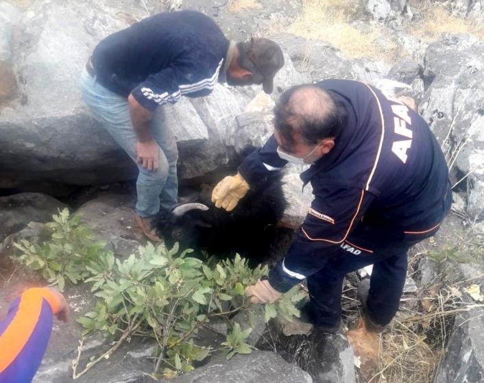 Kayaların arasına sıkışan keçiyi ekipler kurtardı