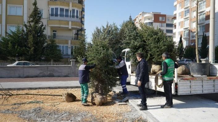 Kent Parkta ağaçlandırma çalışması