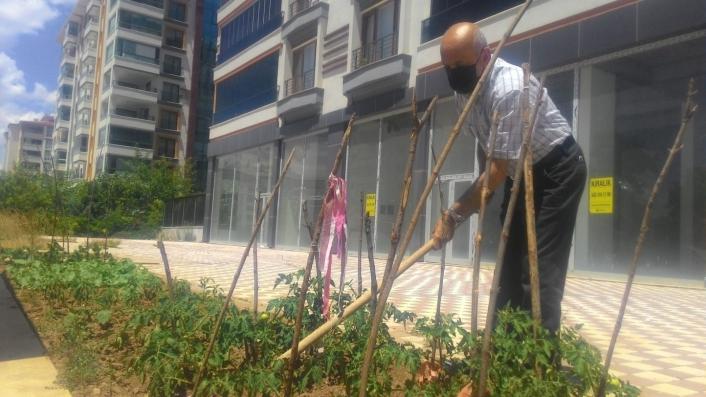 Kısıtlamayı fırsat bildi, apartman önünü hobi bahçesi yaptı