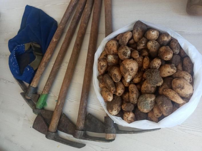 Kısıtlamayı ihlal edip, salep soğanı toplayan 5 kişi 419 bin 690 TL ceza yedi