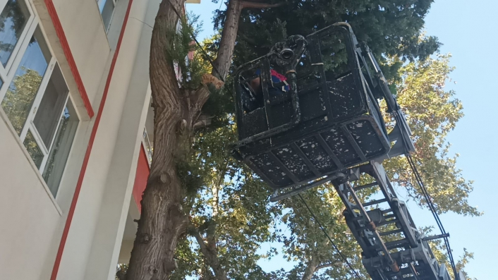 Köpekten kaçarak ağaçta mahsur kalan kediyi itfaiye kurtardı