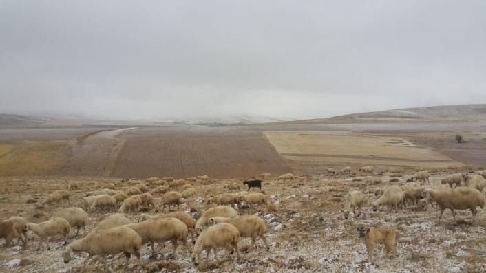 Koyunları otlatırken kar yağışına yakalandılar