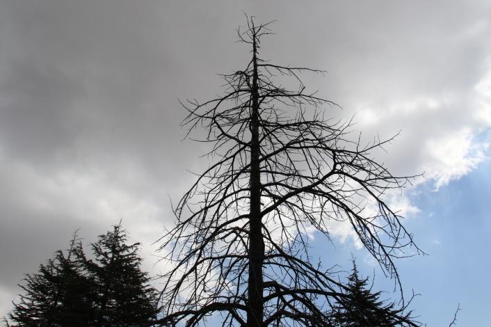 Kuzey Amerika kökenli istilacı böcek, Doğa Anadolu´ya giriş yaptı