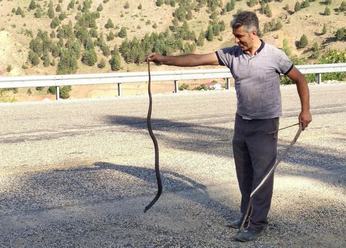 Mahsur kalan yılanı kurtararak doğaya bıraktı