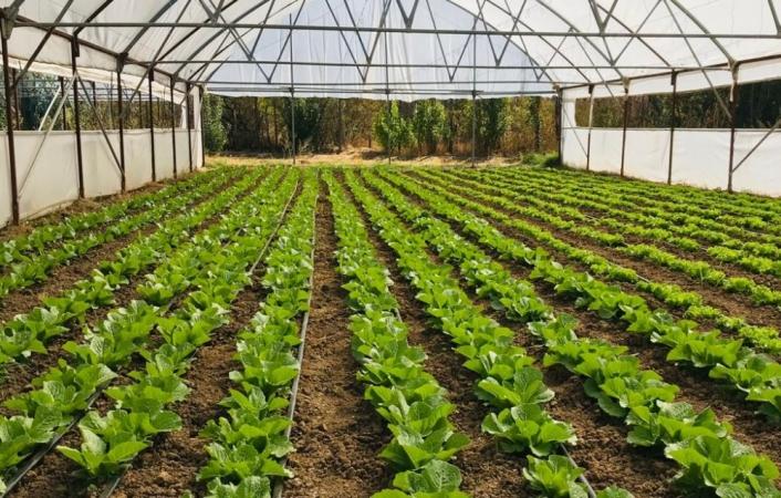 Organik Tarım Desteklemeleri müracaatları başladı