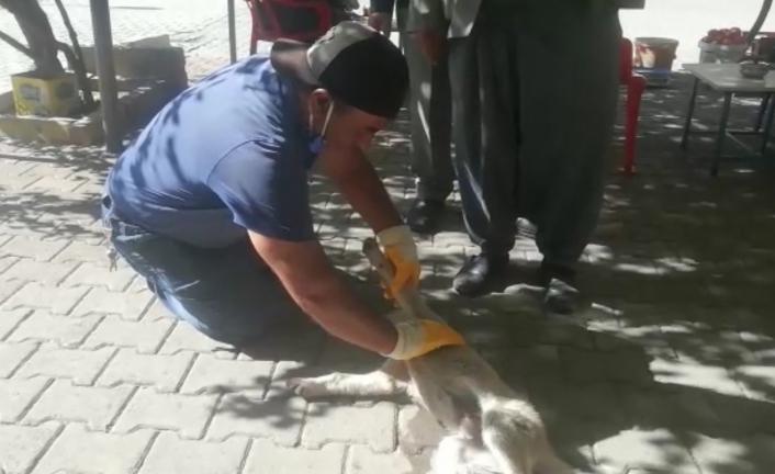 Otomobilin çarptığı yavru köpek kalp masajı ile hayata tutundu