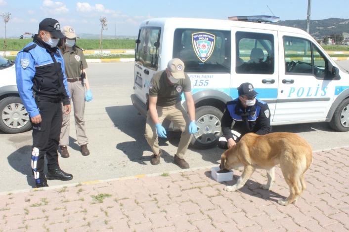 Polis ekipleri sokak hayvanlarının karnını doyurdu