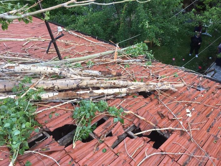 Rüzgarın devirdiği ağaç çatıda hasara neden oldu