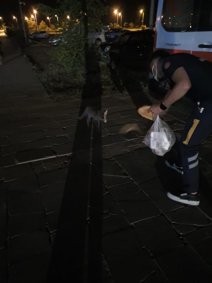 Sağlık çalışanları aç kalan tilkiyi elleriyle besledi