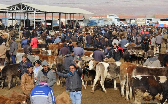 Şarkışla hayvan pazarı açılıyor