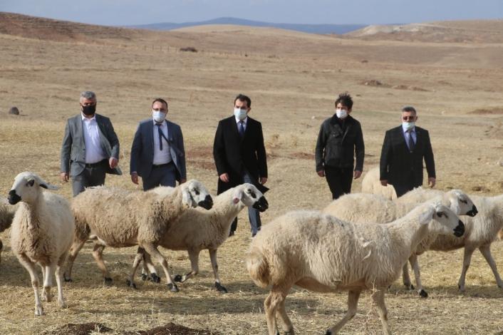 Sivas´ta küçükbaş hayvan yetiştiricileri birleşti, hedef 100 bin koyun
