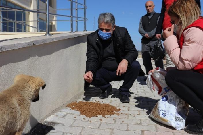 Sokak hayvanlarını besleyen gençlere plaket
