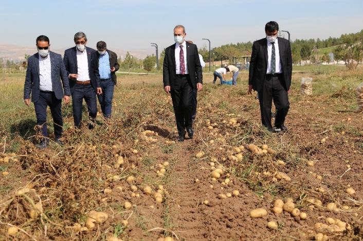 Solucan gübresiyle üretilen patatesler hasat edildi