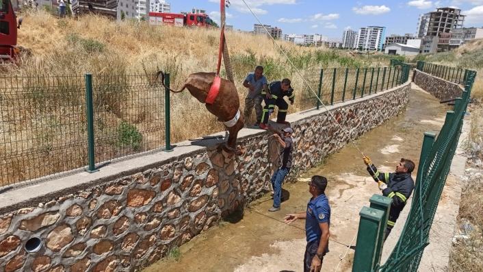 Su kanalına düşen inek itfaiye ekiplerince kurtarıldı