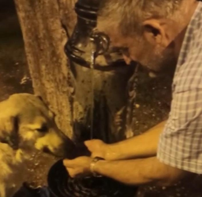 Susuz kalan köpeğin yardımına polis yetişti