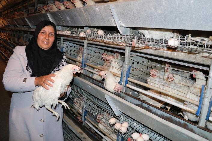 Tavukları telef olan girişimci kadın yeni tavuklarına kavuştu