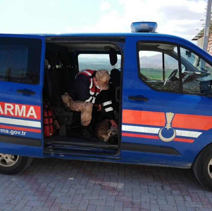 Yaralı köpeği fark eden jandarma, ekip aracıyla hastaneye götürdü
