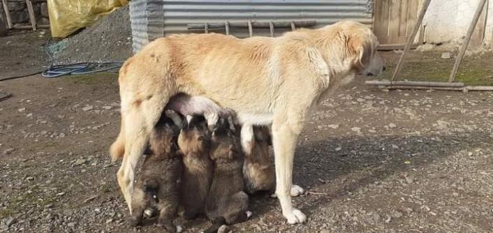 Yavru köpekler annelerine kavuştu