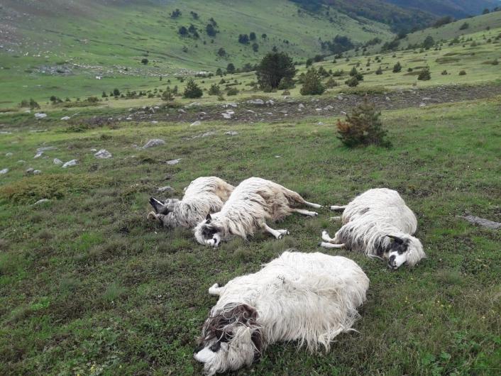 Yıldırım düşmesi sonucu 4 koyun telef oldu